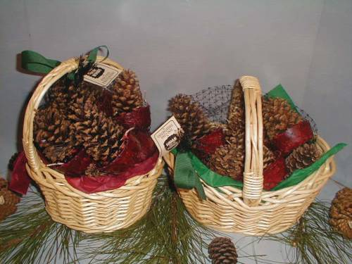 CONE STARTERS 12/WILLOW BASKET